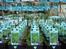 Planten uit ons vijverassortiment
