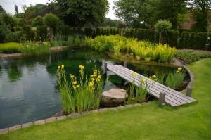 Karpers In Tuin : Vijver de watermolen