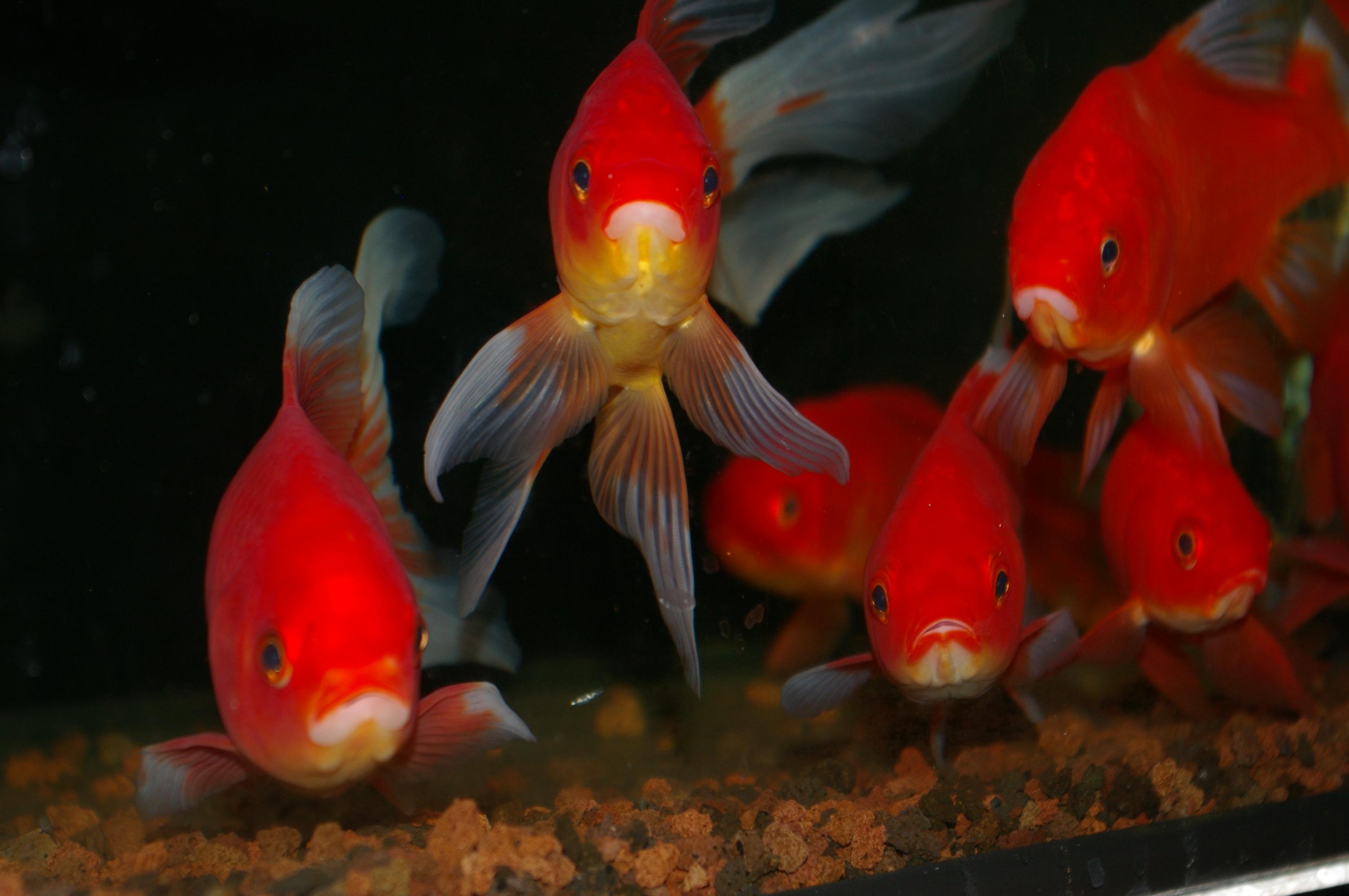 Vissen In Vijver : Vijvervissen de watermolen