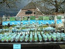 Een breed assortiment vijverplanten
