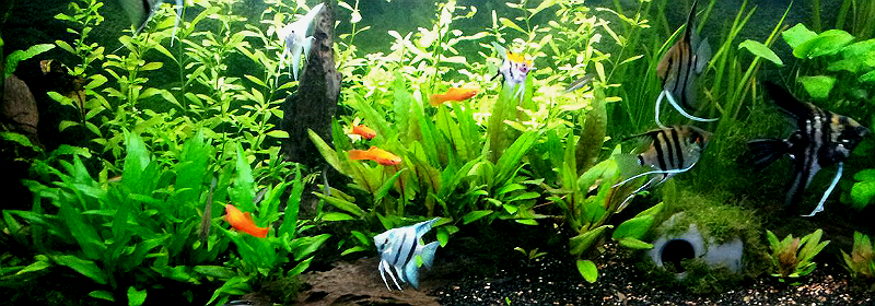 Aquarium Remon bewerkt